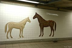 Horses Tile Mosaic, Fifth Avenue Subway Station
