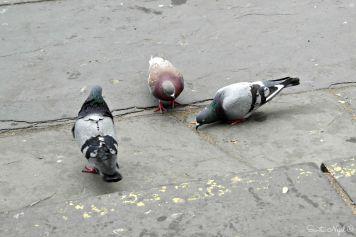 Birdies gotta eat