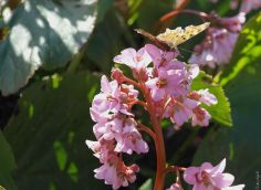 Butterfly in the spring